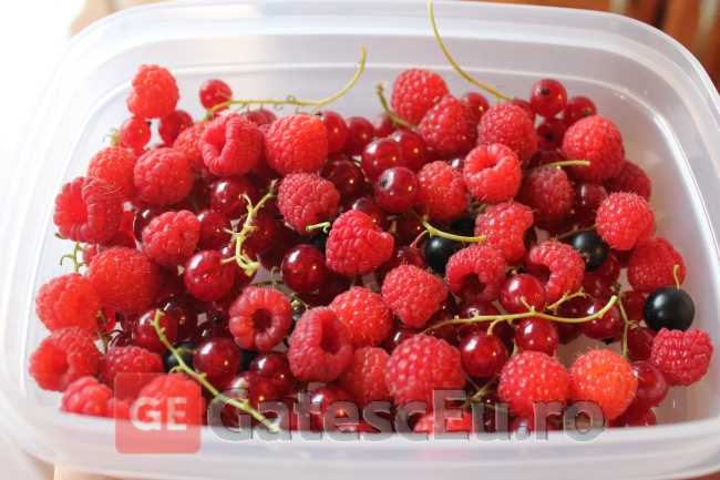 Fructe conservate la congelator
